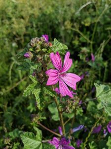 flower on woolwich common - Copy