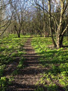 light woodland