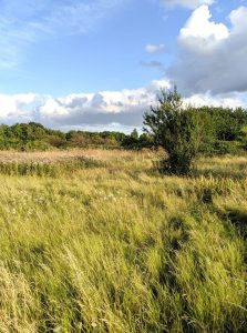 woolwich common - landscape