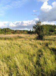 woolwich common - landscape