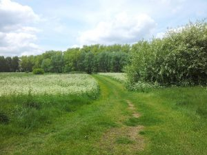 Path across woolwich common