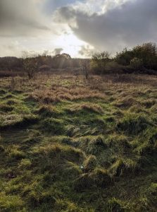 woolwich common november 2019